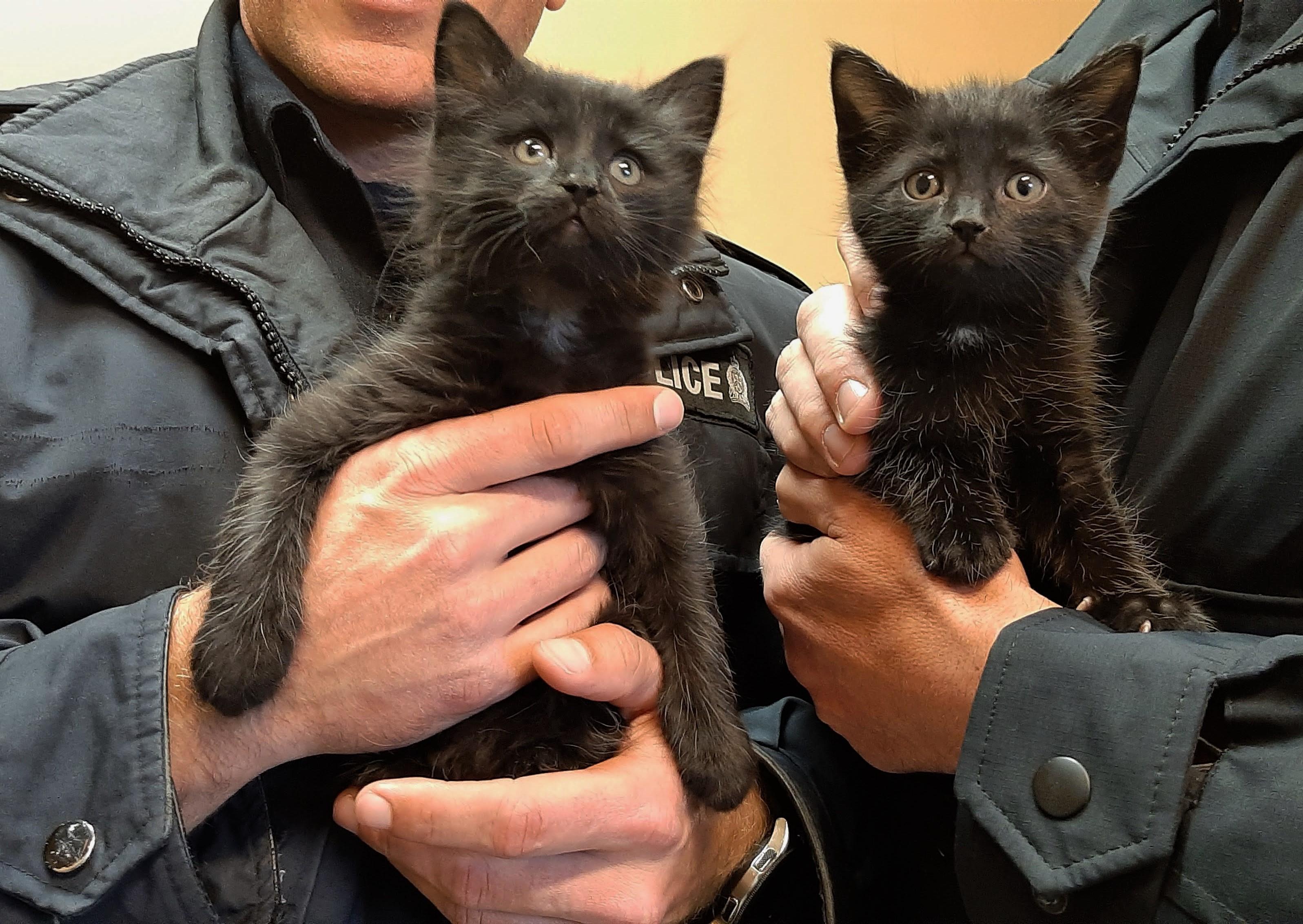 police kittens