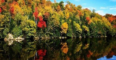 Trees changing colours along the edge of a lake