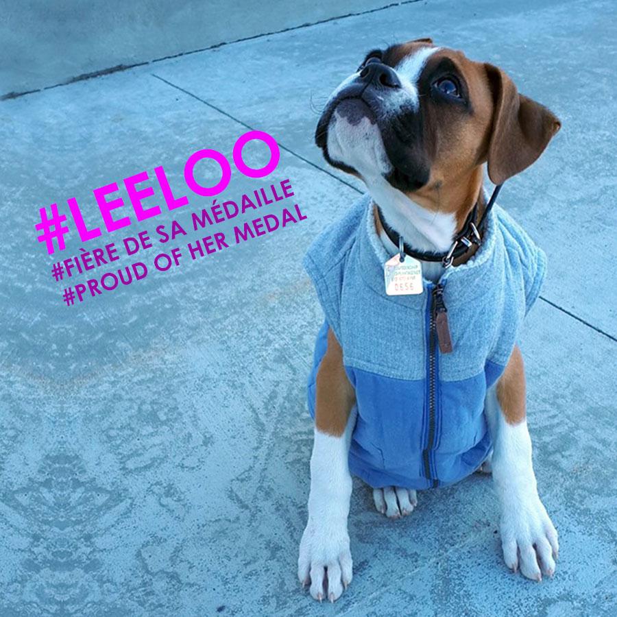 Licence pour chien 2020- Leeloo une chienne fière de sa nouvelle médaille du Canton